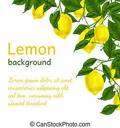 Citronový plakát