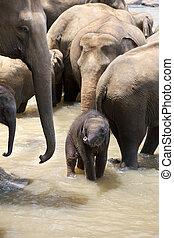 děťátko, indický slon