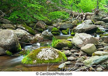 Dřevěná řeka v parku
