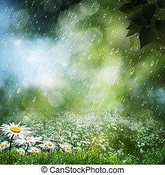 Daisy květiny pod sladkým deštěm, přírodním pozadím