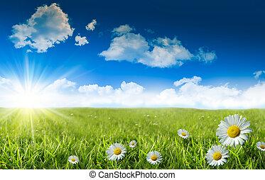 Divoké dámy v trávě s modrou oblohou