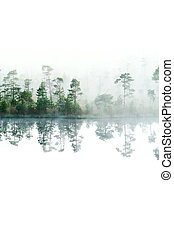 Dobré ráno v lese Taiga. Fog na povrchu vody. Jezero. Izolovaná a dolů