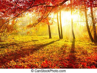Dolní park. Oční stromy a listy. Ústup