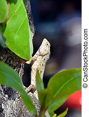 druh, ještěrka, strom, výstup