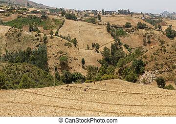 etiopie, krajina, kopcovitý