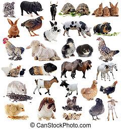 Farmářská zvířata