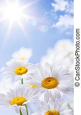 Floralské letní pozadí
