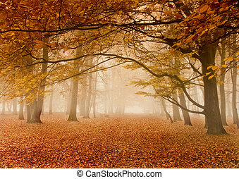 Foggy podzim