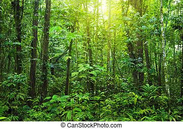 forest., hustý