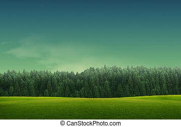forrest, grafické pozadí, pastvina, krajina, mladický kopyto, bojiště, pramen