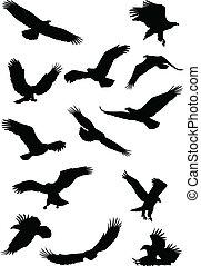 fying, orel silhouette, ptáček