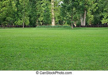Gras Field a stromy