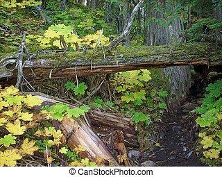 Hluboko v deštivém lese