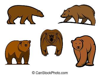 Hnědé divoké medvědy