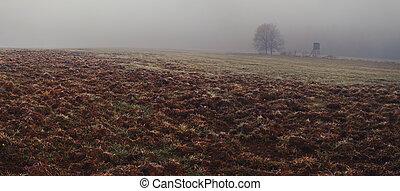 honba, kanec, kopyto, divoký, slepý, pluh snímek, mlha, krajina, bojiště