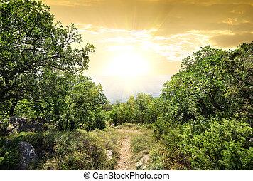 hora, les, sluneční světlo
