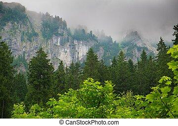 Hora mezi krásnými lesy