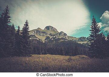 Hora mezi krásnými lesy v tatru