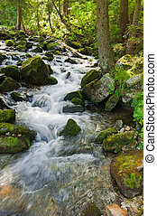 Horská řeka proudí v letní lesní krajině