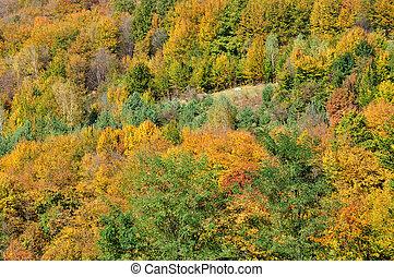 Horská podzimní krajina s barevným lesem