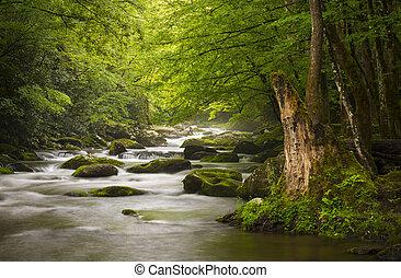 hory, důležitý, povolit, druh, zakouřený, sad, gatlinburg, tn, pokojný, mlhavý, tremont, řeka, národnostní, krajina, scenics
