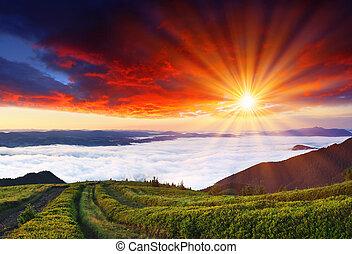 hory, ráno