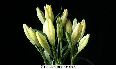 Hromada lilií kvete