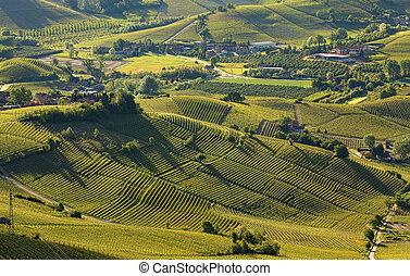 itálie, vyvýšenina, pramen, langhe, časný, vinice, nezkušený, (view, piedmont, above)., ráno