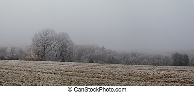 jíní, les, mlha, pokrytý, bojiště, zamrzlý