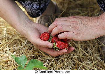 Jahodné jahody