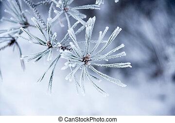 jehlice, zima