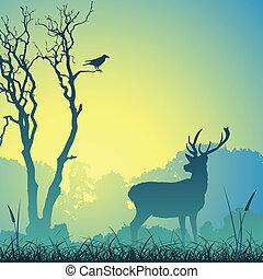jelen, samčí srnec