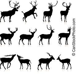 jelen, silueta, vybírání