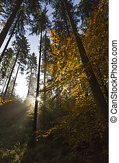jižní, německo, podzimní, les
