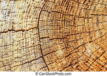Křížový strom