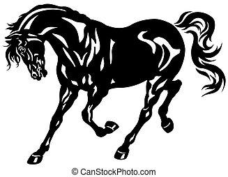 kůň, čerň