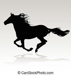 kůň, běh