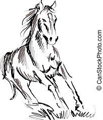 kůň, ilustrace