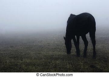 kůň, mlha