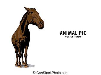 kůň, vektor