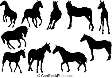 kůň, vektor, silueta, ilustrace