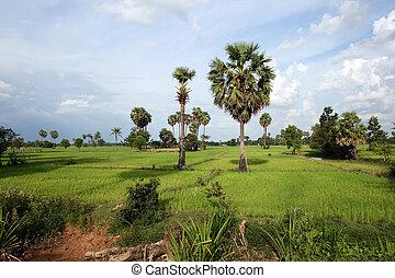 kambodžan, krajina