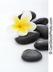 Kameny s frangipanim na bílém pozadí