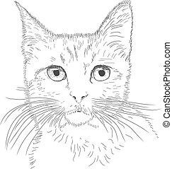 kočka, nakreslit plán