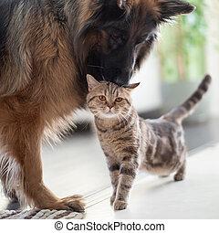 Kocour a pes spolu. Přátelství mezi zvířaty.