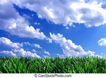 konzervativní, čerstvý, nebe, nezkušený, tráva