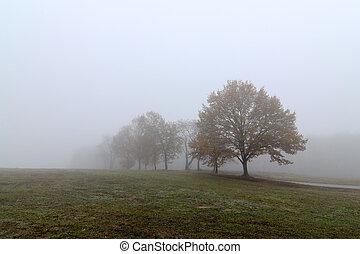 kopyto, mlha