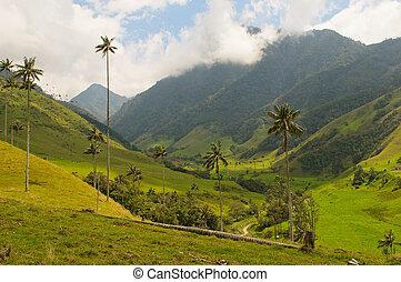 kopyto, vax, dlaň, cocora, kolumbie, údolí
