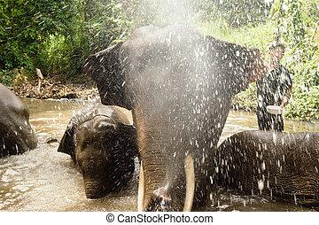 koupání, slon, cáknutí, chiang, thailand., rybník, květen, close-up., provincie