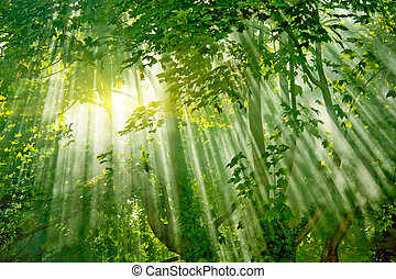 Kouzelné sluneční paprsky v lese